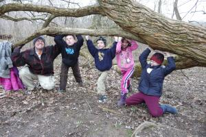 Cub scouts and friends playing in the Osage orange grove